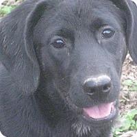 Adopt A Pet :: Vali - Albany, NY