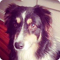 Adopt A Pet :: PIPPEN - DeLand, FL