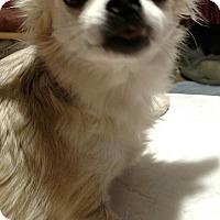 Adopt A Pet :: Mimzy - San Diego, CA