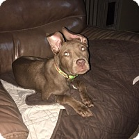 Adopt A Pet :: Mia formerly Pookie - Las Vegas, NV