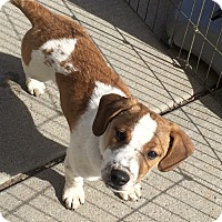 Adopt A Pet :: Grumpy in CT - Manchester, CT