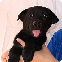 Adopt A Pet :: Chanel - Oviedo, FL