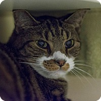 Adopt A Pet :: Kyle - New York, NY