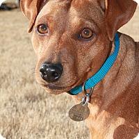 Adopt A Pet :: Elliot - Homewood, AL