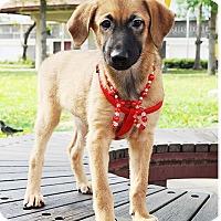Adopt A Pet :: Babs - Surrey, BC