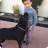 Adopt A Pet :: Barney - Studio City, CA