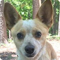 Adopt A Pet :: Rue - Hagerstown, MD