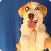 Adopt A Pet :: Collin - Oviedo, FL