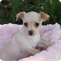 Adopt A Pet :: LOLLI - Newport Beach, CA
