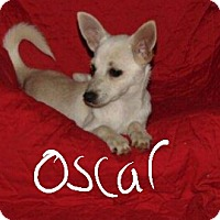 Adopt A Pet :: Oscar - Albany, NC