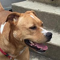 Adopt A Pet :: Arra - Alvarado, TX