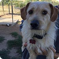 Adopt A Pet :: Elmo - Aurora, CO