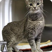 Adopt A Pet :: Shadow - Port Hope, ON