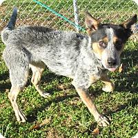 Adopt A Pet :: Roper - Reeds Spring, MO