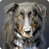 Adopt A Pet :: Taz - Newland, NC