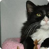 Adopt A Pet :: Sebastian - Kinston, NC