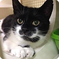 Adopt A Pet :: Gigi - Hendersonville, NC