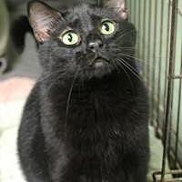 Adopt A Pet :: Footsie - Yukon, OK