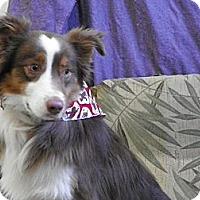 Adopt A Pet :: Otis - Roosevelt, UT
