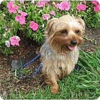 Adopt A Pet :: Twink - Conroe, TX