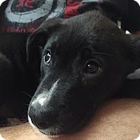 Adopt A Pet :: Aphrodite - Miami, FL