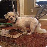 Adopt A Pet :: Baxter - Homewood, AL