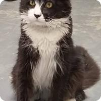 Adopt A Pet :: Gino - Tinton Falls, NJ