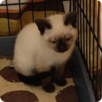 Adopt A Pet :: Sparkle - San Ramon, CA