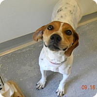 Adopt A Pet :: GINNY - Sandusky, OH
