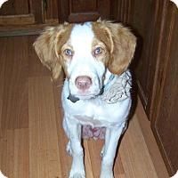 Adopt A Pet :: PA/Zoey - Pittsburgh, PA