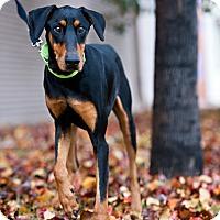 Adopt A Pet :: Waylon - Houston, TX