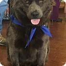 Adopt A Pet :: Caboose