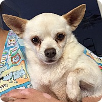 Adopt A Pet :: Frosty - Orlando, FL