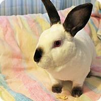 Adopt A Pet :: columbus - Hillside, NJ