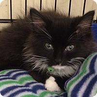 Adopt A Pet :: Tuxe - North Highlands, CA