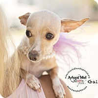Adopt A Pet :: GAYLE - Inland Empire, CA