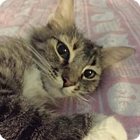 Adopt A Pet :: Princess Aurora - Scottsdale, AZ