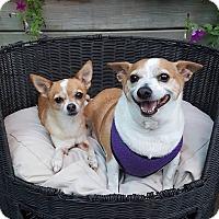 Adopt A Pet :: Rocky and Tinkerbelle - Hazlet, NJ