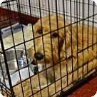 Adopt A Pet :: Camila
