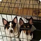 Adopt A Pet :: Pup Kole