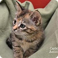 Adopt A Pet :: Carley - Conroe, TX