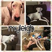 Adopt A Pet :: Myleigh - Lubbock, TX