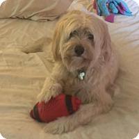 Adopt A Pet :: Tyler - Atlanta, GA