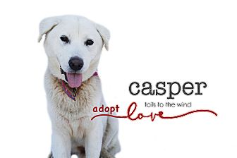 Samoyed/Great Pyrenees Mix Dog for adoption in Sun valley, California - Casper