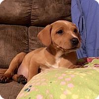 Adopt A Pet :: Trisha - pending - Manchester, NH