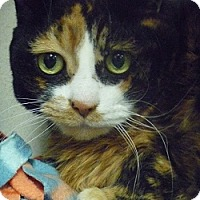Adopt A Pet :: Zena - Hamburg, NY