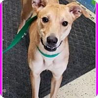 Adopt A Pet :: Martini - Elburn, IL
