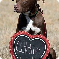 Adopt A Pet :: Eddie - Broken Arrow, OK