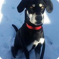 Adopt A Pet :: Taj - Northville, MI