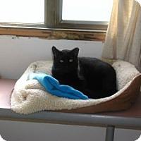Adopt A Pet :: Blackie - Appleton, WI